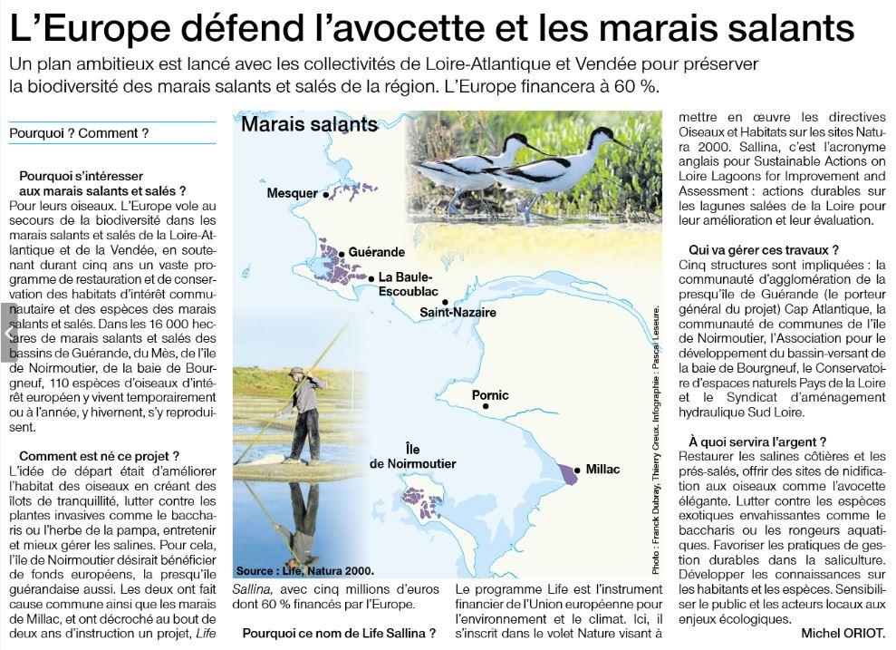 L'Europe défend l'avocette et les marais salants