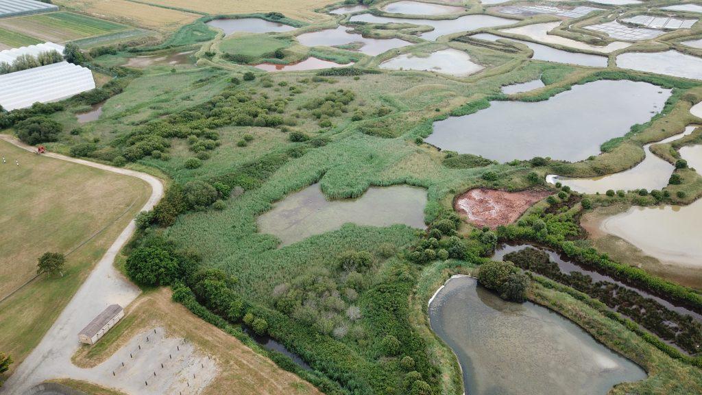 Quand les marais salants de Guérande accueillent l'une des espèces d'oiseaux les plus menacées d'Europe